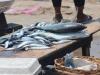 EU Threatens To Ban Fish From Ghana