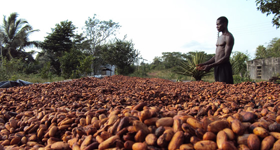 Ghana, Ivory Coast Looking To Regulate Cocoa Industry's Sustainability Schemes – Sources